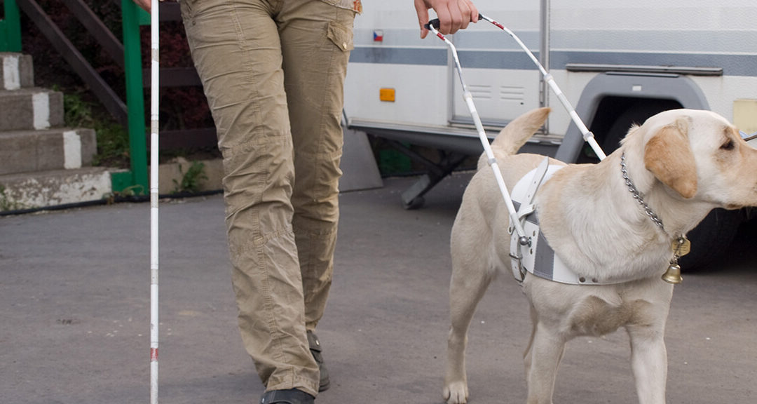 The South African National Council for the Blind joins the World Blind Union and the rest of the world in observing international Guide Dogs Day, 24 April 2019